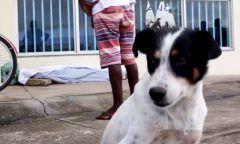 Morador de rua é morto a pedrada e cão da vítima fica ao lado do corpo até a chegada da polícia