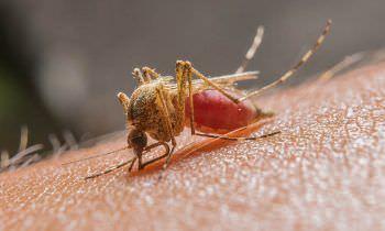 Mais de 11 mil casos de malária são registrados no Amazonas