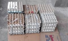Feira da Panair: ovos e peixes são apreendidos fora das normas sanitárias