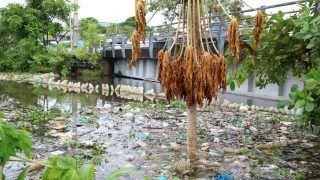 Projeto de Lei visa substituir sacolas plásticas em supermercados