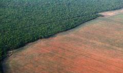 Desmatamento cresce 15% nos últimos 12 meses, diz ONG