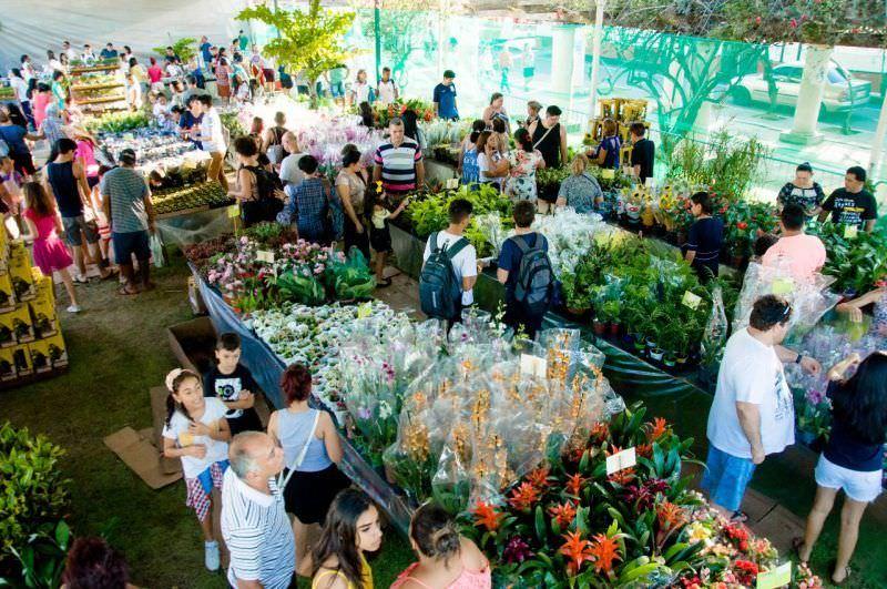 Flores de Holambra em Manaus 2019