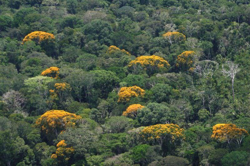 Amazonas reduz em 39% número de queimadas no mês de setembro