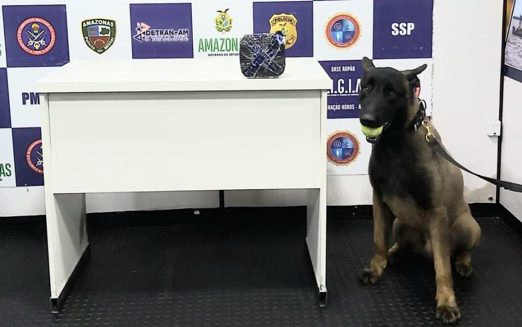 Cão policial encontra cocaína escondida em bote salva-vidas