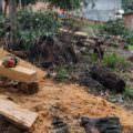 Homem é preso em flagrante no momento em que cortava árvores na zona Norte