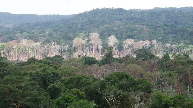 Assembleia de Rondônia aprova redução de 200 mil hectares de áreas de conservação