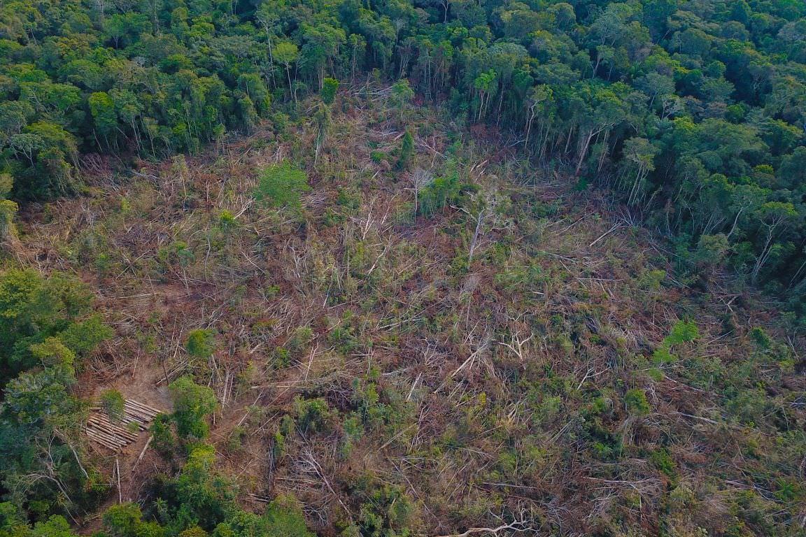 Aumento do desmatamento na Região Norte não reflete no Amazonas, diz Sema